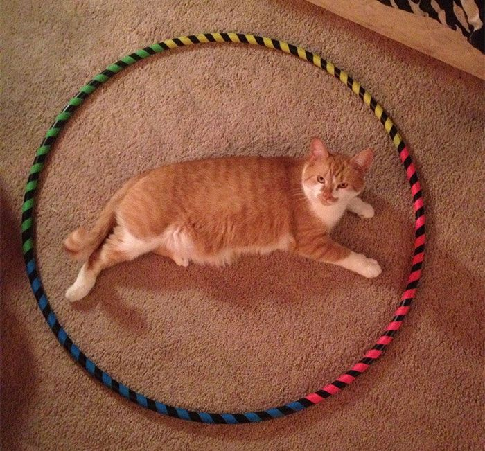 how-to-trap-a-cat-circle-12