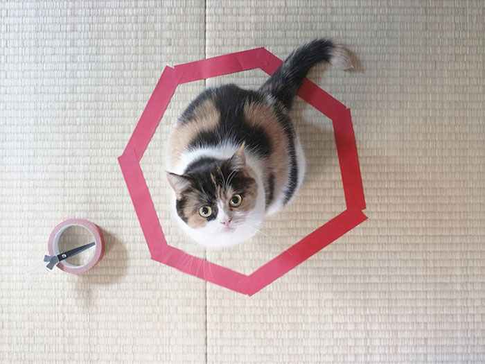 how-to-trap-a-cat-circle-3