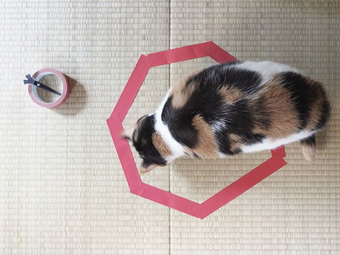 how-to-trap-a-cat-circle-4