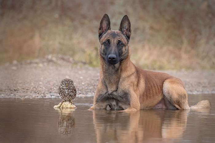 ingo-else-dog-owl-friendship-tanja-brandt-14